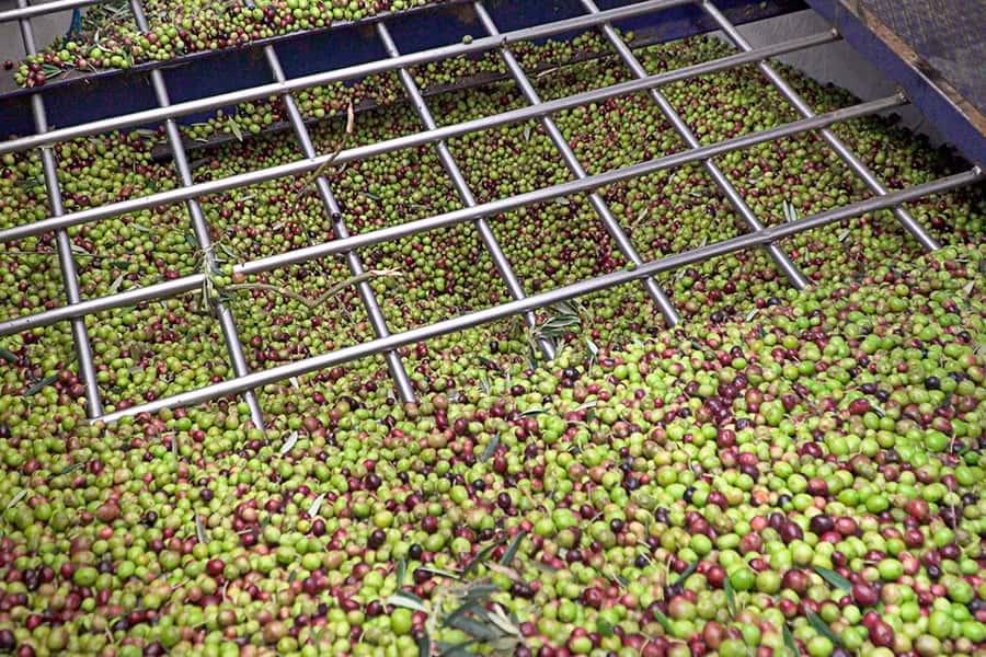 Aceite de oliva virgen extra Hejul - Elaboración